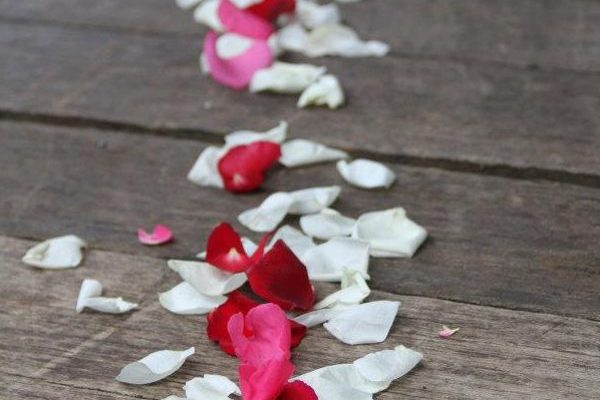 Rose Petals Secrets on the Lake Maleny Accommodation
